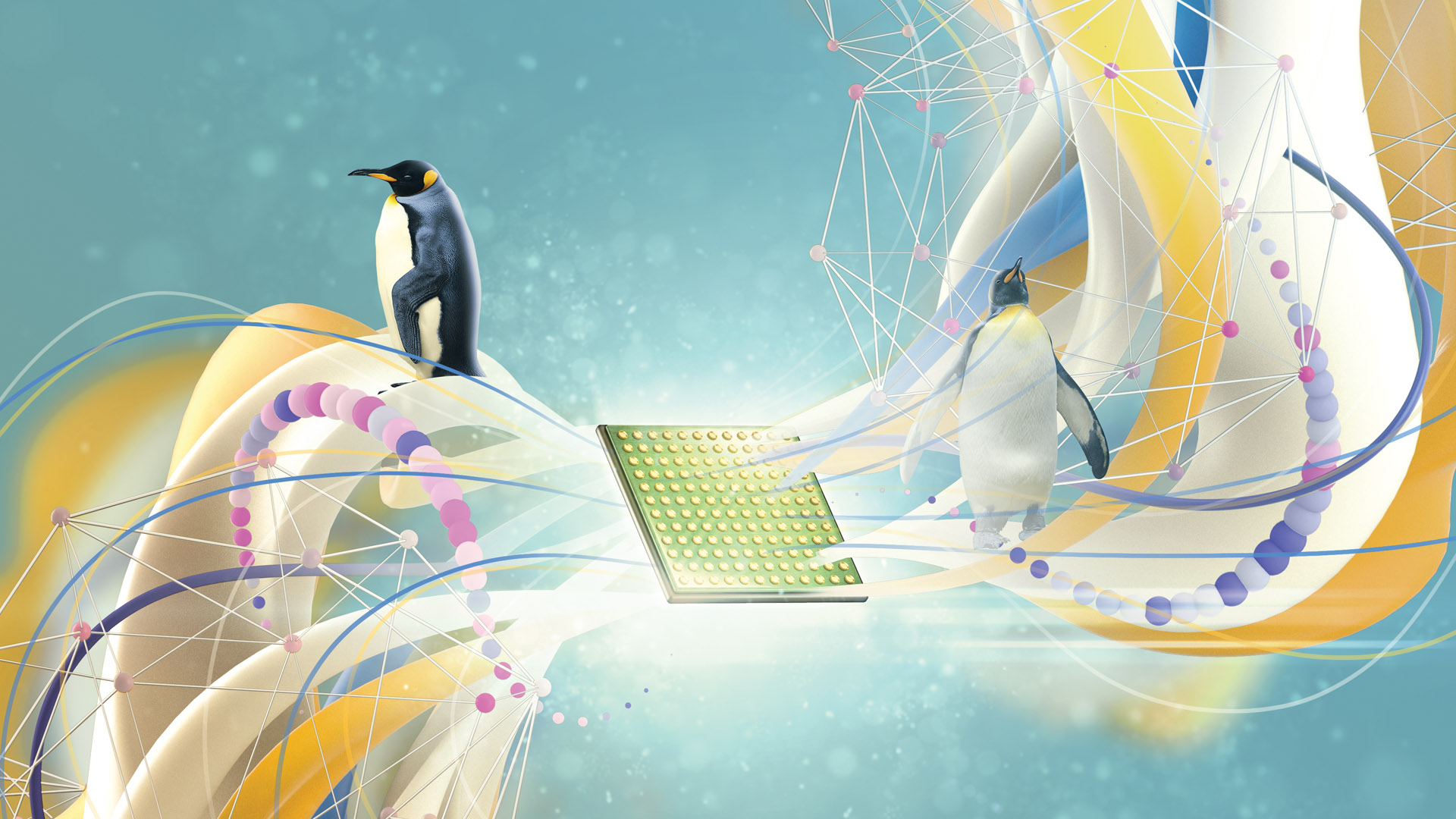 Penguins on illustration